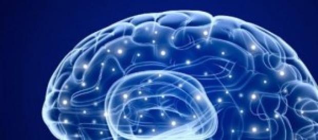 Un gran paso en entender cómo funciona el cerebro