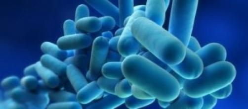 Infeção por inalação de Legionella.