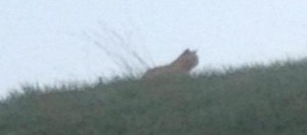 Caccia alla tigre vicino Eurodisney Paris
