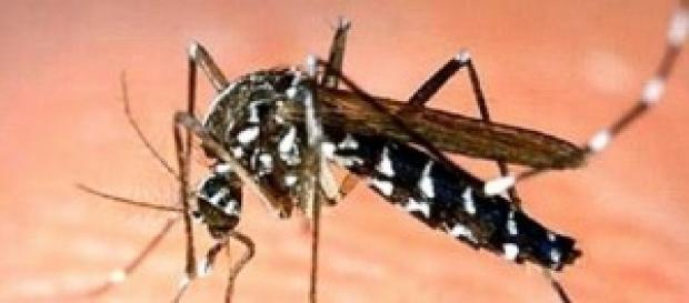 Dengue: lidando com o perigo