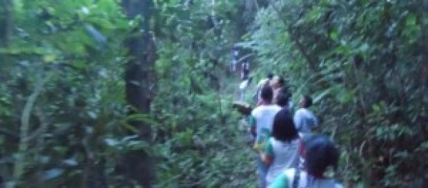 Reserva ambiental no Espírito Santo