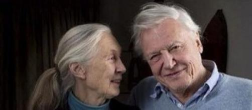 Jane Goodall e David Attenborough