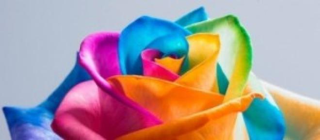 Floresce um novo arco-íris