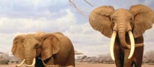 Elefantes en su medio natural