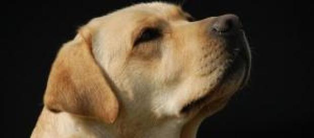 Saiba mais sobre vômito em cães