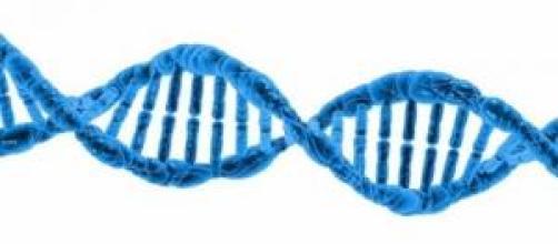 ¿Los genes determinan la homosexualidad?
