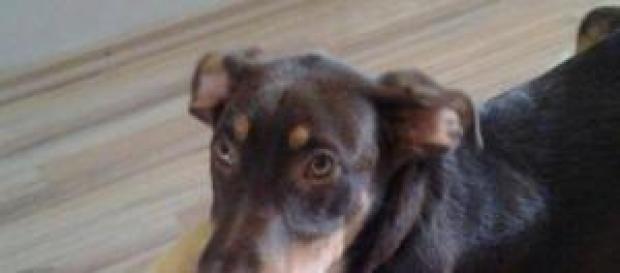 Un perro adoptado en su nueva casa