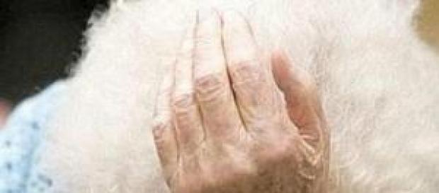 Ancora un caso di maltrattamenti su anziani