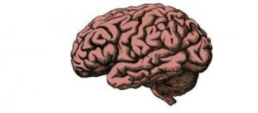 Banco de cérebros humanos