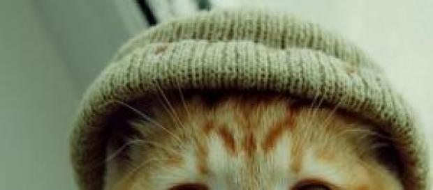 Foto de gatito con gorro de lana