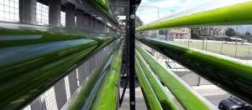 Imagen del cultivo en una autovía suiza