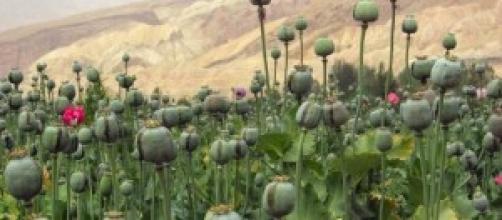 La legalización de las drogas, una solución.