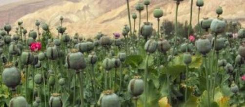 Lagos pide la legalización de todas las drogas.