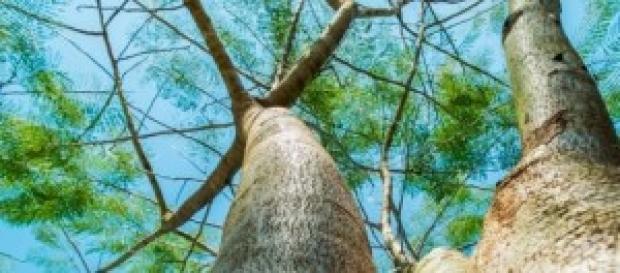 Eco-árboles, una modalidad sustentable
