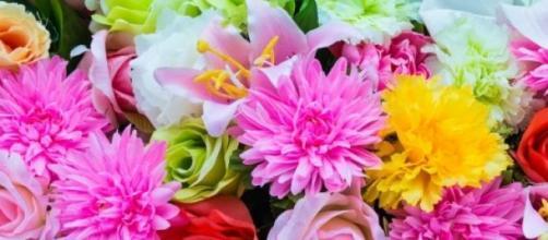 As flores e o que elas dizem sobre você