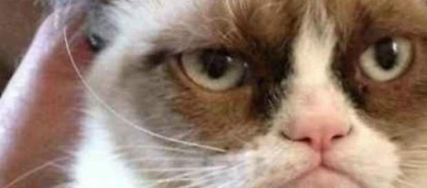 Grumpy cat, dal musetto imbronciato