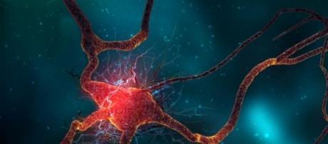 Neurotransmisión de señales
