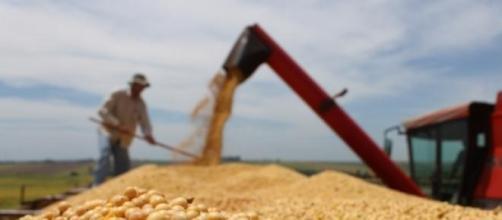 Crescimento do agronegócio movimenta a economia