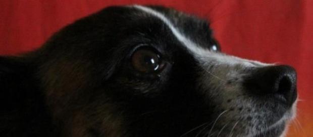 Los perros podrían intuir la llegada de sus amos