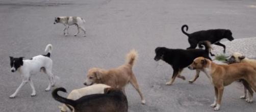 É comum ver cães abandonados pelas ruas