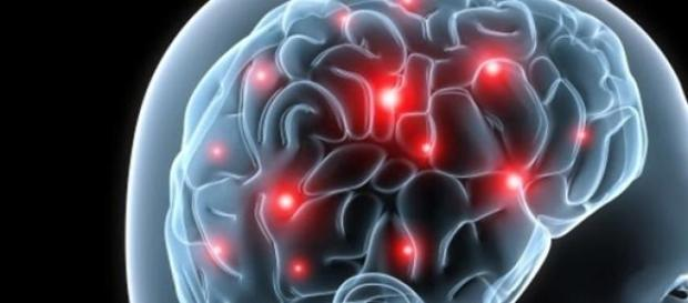 El cerebro desvela secretos a científicos