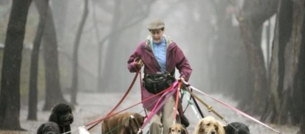 Even In Recession, Dog Walkers' Hands Are Full