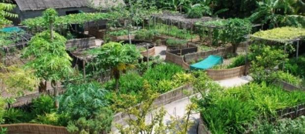 Permacultura o cultivo ecológico