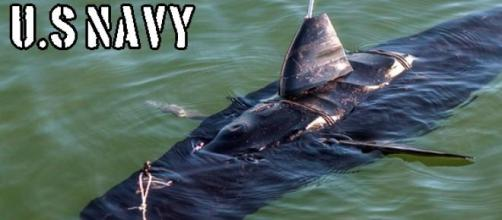 Drone de la U.S Navy con forma de Tiburón