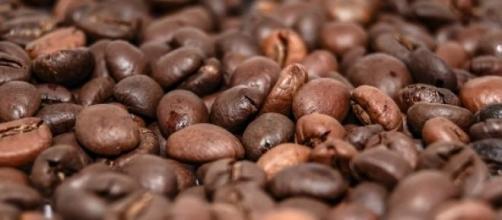 Estudo sobre café no Brasil