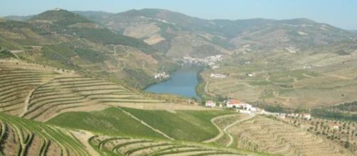 Douro tem os melhores vinhos do mundo