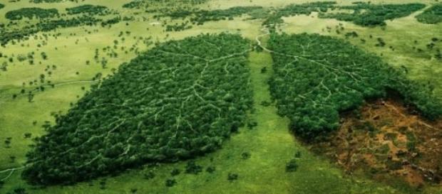Amazônia: o pulmão do mundo - Mito ou verdade