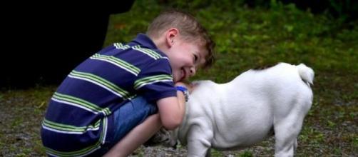 Saúde Humana e Animal: uma só?
