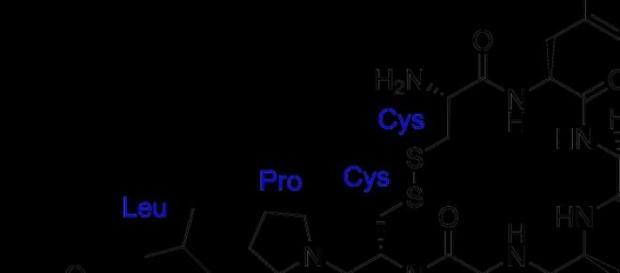 Ocitocina: o hormônio do amor.