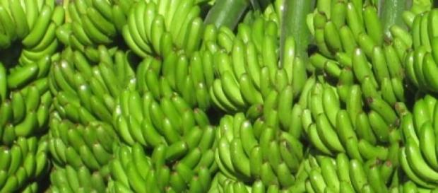 Los plátanos y su alto contenido radiactivo