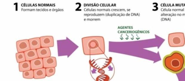 Como ocorre a divisão celular e a neoplasia