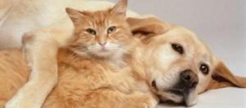 Los gatos creen que somos como ellos