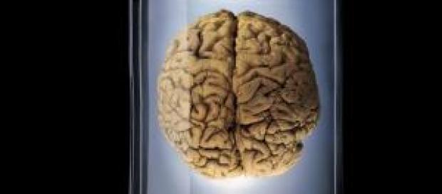 100 cerebros en botes fueron robados