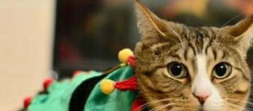 Un lindo gatito que vivió una terrible experiencia