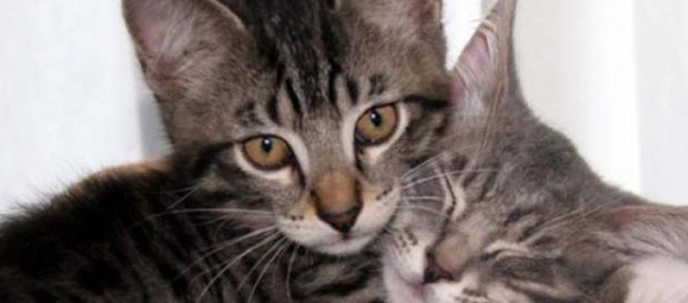 Gatitos en un abrazo sanador