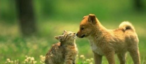 A carne de gato é uma das iguarias do Natal