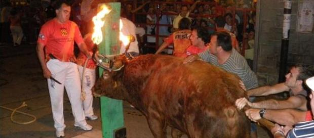 El toro embolao en Arañuel