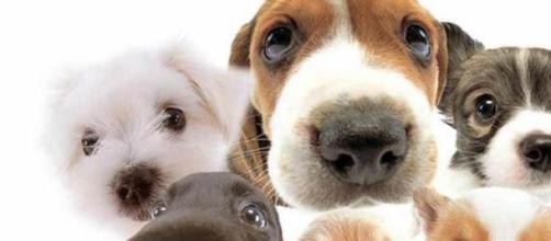 Cães: amigos fiéis  e verdadeiros