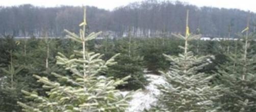 L'arbre de Noël ne connaît pas la crise