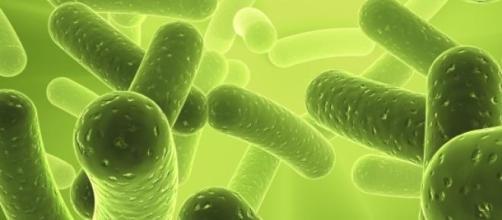 A Legionella assolou o país