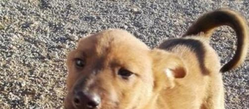 Cachorro de una protectora que necesita adopción