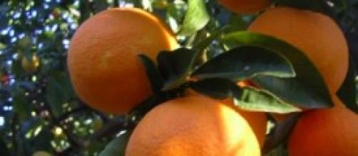 La vitamina C contro il cancro