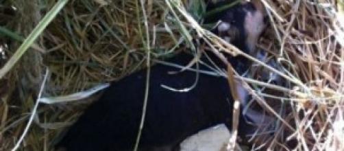 Ennesima strage di cani randagi a Catanzaro