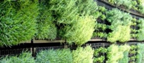 un semplice esempio di verticalità verde-
