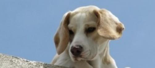 Nascerà a Milano una clinica veterinaria pubblica