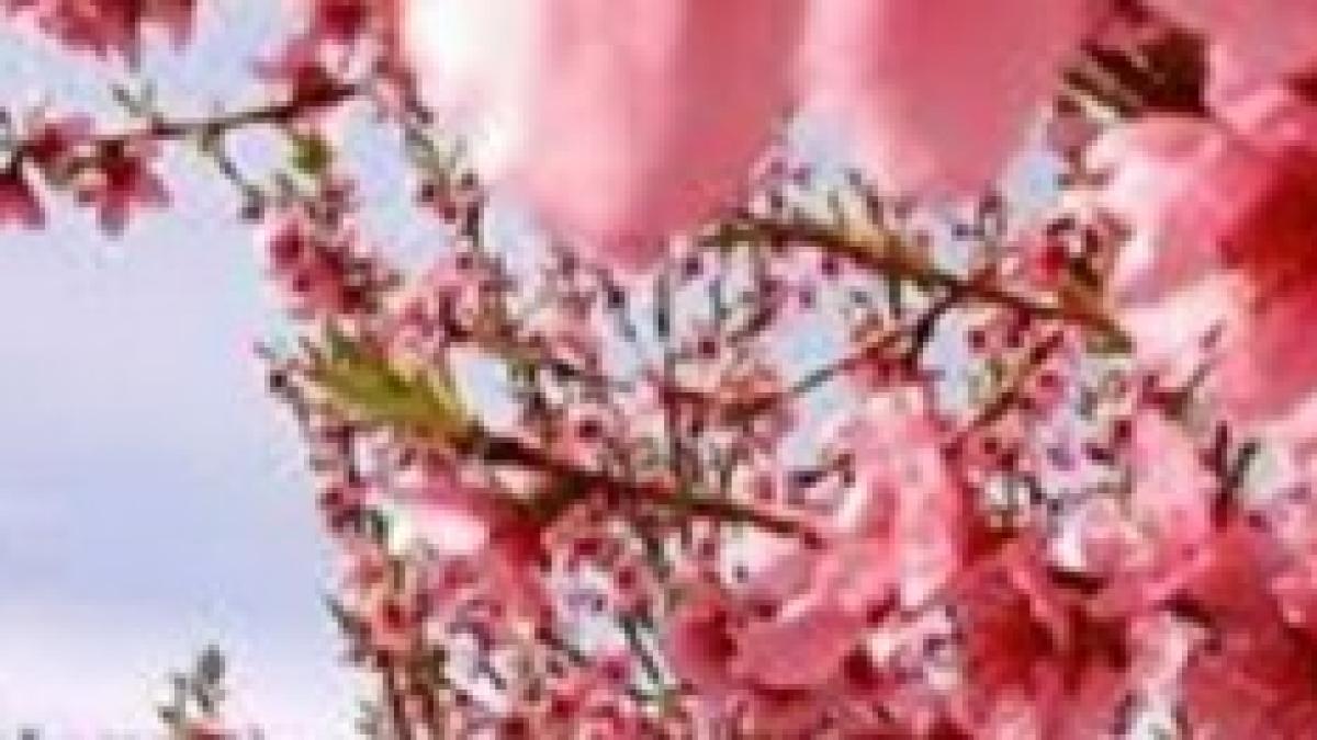 Fiori Del Mese Di Giugno fiori, sposi e fortuna… nel mese di aprile
